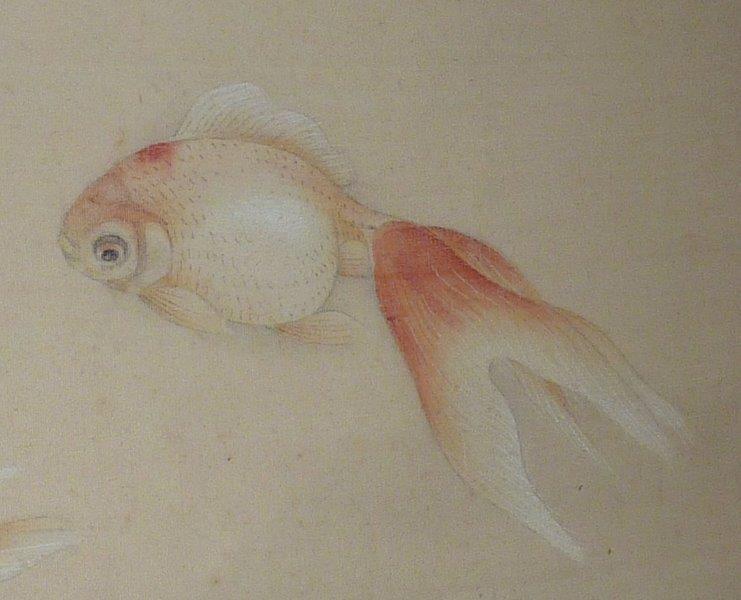 Prudence plumes d 39 anges for Poisson rouge japonais